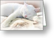 Kitty Digital Art Greeting Cards - Sweet Dreams Greeting Card by Andee Photography