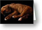 Purebreed Greeting Cards - Sweet Dreams Puppy Greeting Card by Angie McKenzie