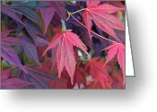 Fall Scenes Greeting Cards - Sweet gum Greeting Card by Larry Bishop