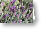 Tiny Flowers Greeting Cards - Sweet Lavender Greeting Card by Carol Groenen