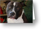 Pitbull Greeting Cards - Sweet Little Pitty Greeting Card by Larry Marshall