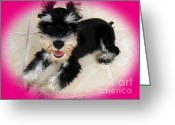 Dogs Greeting Cards - Sweet Little Schnauzer Greeting Card by Tisha McGee