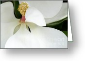 Snowy Tree Greeting Cards - Sweet Magnolia Flower Greeting Card by Sabrina L Ryan