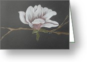 Flower Tree Drawings Greeting Cards - Sweet Magnolia Greeting Card by Ginny Youngblood