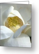 Blossoms Greeting Cards - Sweet Magnolia Greeting Card by Karen Wiles