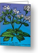 Primitive Mixed Media Greeting Cards - Sweet Marjoram Greeting Card by Eric Edelman