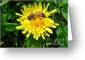 Dandelion Pyrography Greeting Cards - Sweet Nectar Greeting Card by The Kepharts