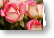 Courting Greeting Cards - Sweet Roses Greeting Card by Sabrina L Ryan
