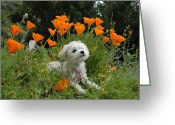 Wildflower Photos Greeting Cards - Sweet Sunshine Greeting Card by Lynn Bauer