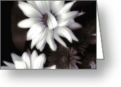 White Daisies Greeting Cards - Sweet Surprise Greeting Card by Bonnie Bruno