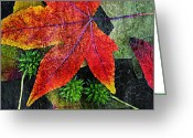 Autumn Colors Greeting Cards - Sweetgum Greeting Card by Bonnie Bruno