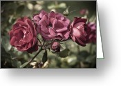 Thoughtful Greeting Cards - Sweetly Pink Greeting Card by Christi Kraft