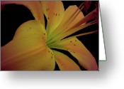 Bold Blossom Greeting Cards - Sweetness Glow Greeting Card by Debra     Vatalaro