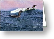 Sportsmen Greeting Cards - Swimming - Diving Birds Greeting Card by Pg Reproductions