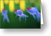 Three Animals Greeting Cards - Swimming Fishes Underwater Greeting Card by Yuki Crawford