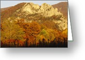 Trees And Rock Cliffs Greeting Cards - Sycamore And Oak Trees At Sunset Greeting Card by Raymond Gehman