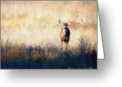 Fawns Greeting Cards - Sycamore Grove Series 2 Greeting Card by Carol Groenen