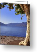 Contemplation Greeting Cards - sycamore tree at the Lake Maggiore Greeting Card by Joana Kruse