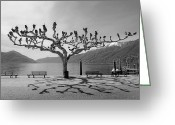 Shade Greeting Cards - sycamore trees in Ascona - Ticino Greeting Card by Joana Kruse