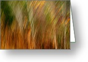 Colors Of Autumn Greeting Cards - Sylvan Meld Greeting Card by Bill Morgenstern