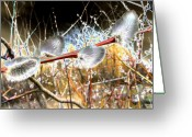 Willows Digital Art Greeting Cards - Symbol Of Spring Greeting Card by Will Borden