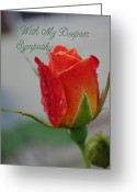 Robyn Stacey Photo Greeting Cards - Sympathy Josephs Coat Rosebud Greeting Card by Robyn Stacey