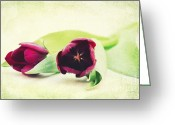 Flowers Pictures Greeting Cards - Symphony of Tulips Greeting Card by Angela Doelling AD DESIGN Photo and PhotoArt