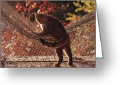 Domestic Scenes Greeting Cards - Tabby Cat Caught Climbing On A Net Greeting Card by Medford Taylor