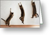 Three Animals Greeting Cards - Tabby Cat Jumping Greeting Card by Hulya Ozkok
