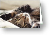 Manchester Greeting Cards - Tabby Cat Greeting Card by Michelle McMahon