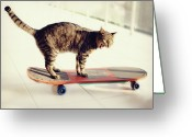 Indoors Greeting Cards - Tabby Cat On Skateboard Greeting Card by Hulya Ozkok