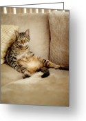 Staring Greeting Cards - Tabby Cat  Sitting Like A Human Greeting Card by Hulya Ozkok