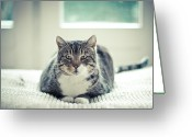 Staring Greeting Cards - Tabby Cat Staring Straight In Camera Greeting Card by Cindy Prins