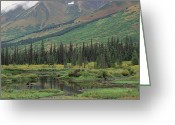 U.s. National Forest Greeting Cards - Taiga Vegetation And Beaver Pond Greeting Card by Gerry Ellis