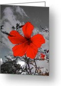 Black Artwork Greeting Cards - Take a Stand Greeting Card by Robert Pearson