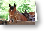 Quarter Horses Greeting Cards - Taking A Break Greeting Card by Jan Amiss Photography