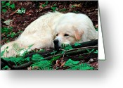 Watch Dog Greeting Cards - Taking a Break Greeting Card by Thomas R Fletcher