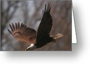 Bird Of Flight Greeting Cards - Taking Aim on Lunch Greeting Card by Robert Pearson
