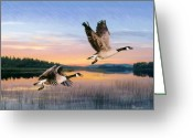 Goose Drawings Greeting Cards - Taking Flight Greeting Card by Brent Ander
