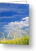 Summertime Greeting Cards - Tall grass on sand dunes Greeting Card by Elena Elisseeva