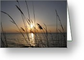 Sundown Greeting Cards - Tall Grass Sunset Greeting Card by Bill Cannon