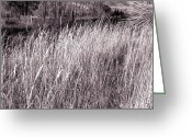 Wild Grass Greeting Cards - Tall Grasses Greeting Card by Will Borden