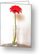 Gerber Greeting Cards - Tall Red Greeting Card by Marsha Heiken
