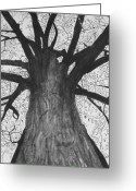 Oak Leaf Drawings Greeting Cards - Tall Tree Greeting Card by Cathy Jourdan