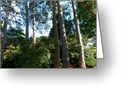  Parks Drawings Greeting Cards - Tall Trees Greeting Card by Andrew Read
