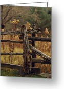 Wood Fences Greeting Cards - Tall Weeds In Autumn Brown Greeting Card by Raymond Gehman