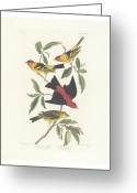 Litho Greeting Cards - Tanagers Greeting Card by John James Audubon
