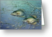 Fish Painting Greeting Cards - Tangled Cover Crappie II Greeting Card by JQ Licensing