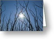 Devastation Greeting Cards - Tangled Skeletal Finger-like Bows Reach Greeting Card by Jason Edwards