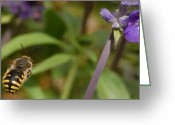 Fine Photography Art Greeting Cards - Target In Sight - Honey Bee  Greeting Card by Steven Milner